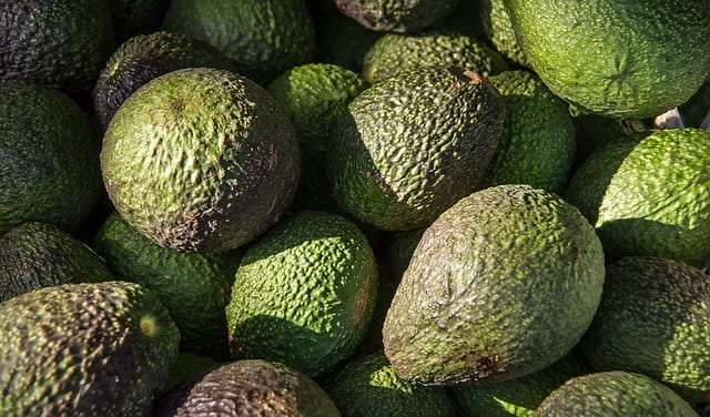 Avocado shortage will affect the USA