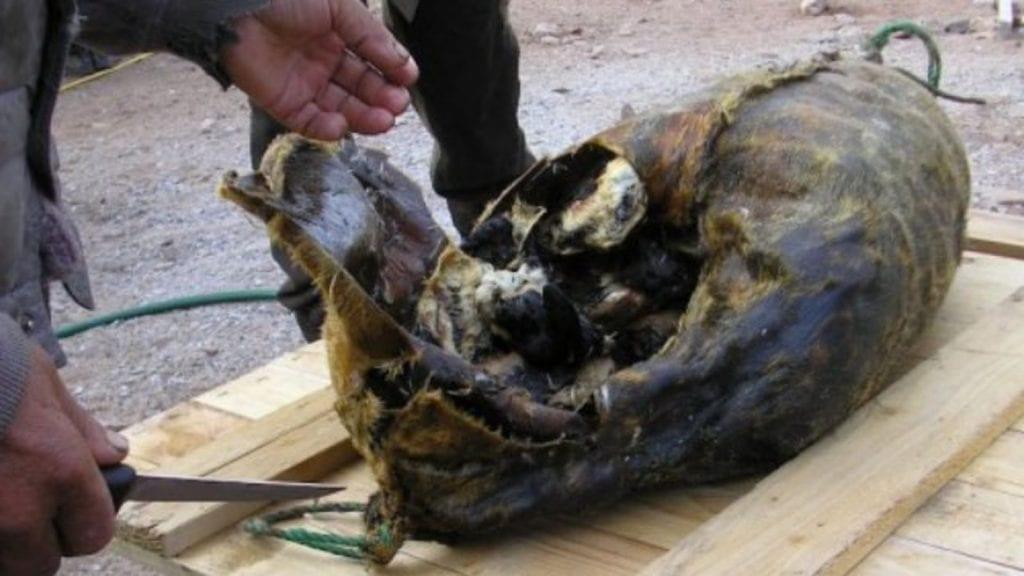 Kiviak is a dead seal stuffed with hundreds of auk birds