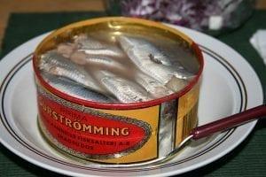 Surströmming Swedish stinky fish delicacy